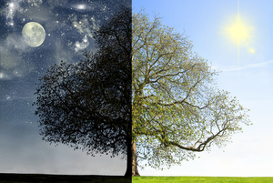 DAY VS NIGHT TREE CONCEPT © Lenazajchikova | Dreamstime.com